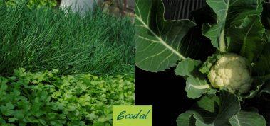 Ecodal, notre fournisseur de légumes bio au cœur du Payottenland